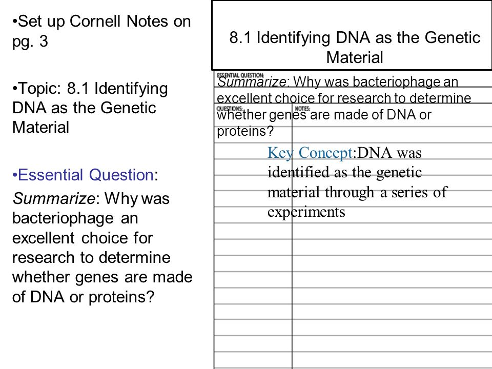 8.2 Structure of DNA Set up Cornell Notes on pg. 3 Topic: 8.1 Identifying DNA as the Genetic Material Essential Question: Summarize: Why was bacteriop