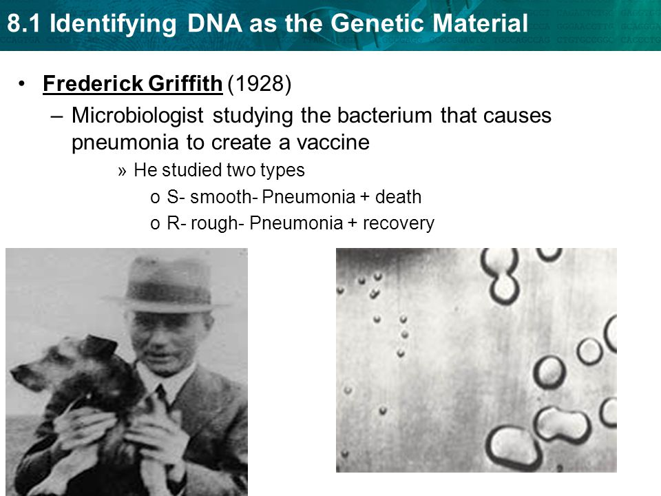 8.1 Identifying DNA as the Genetic Material Frederick Griffith (1928) –Microbiologist studying the bacterium that causes pneumonia to create a vaccine