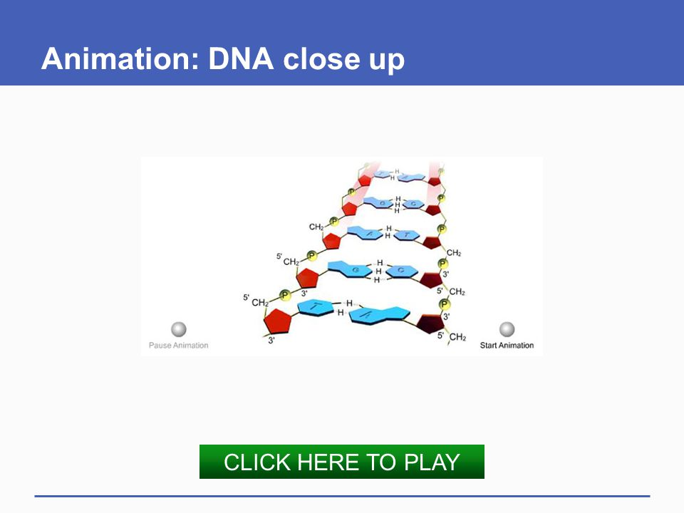 Animation: DNA close up CLICK HERE TO PLAY