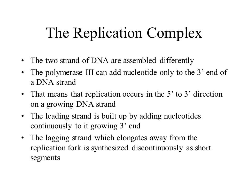 The Replication Complex The two strand of DNA are assembled differently The polymerase III can add nucleotide only to the 3' end of a DNA strand That