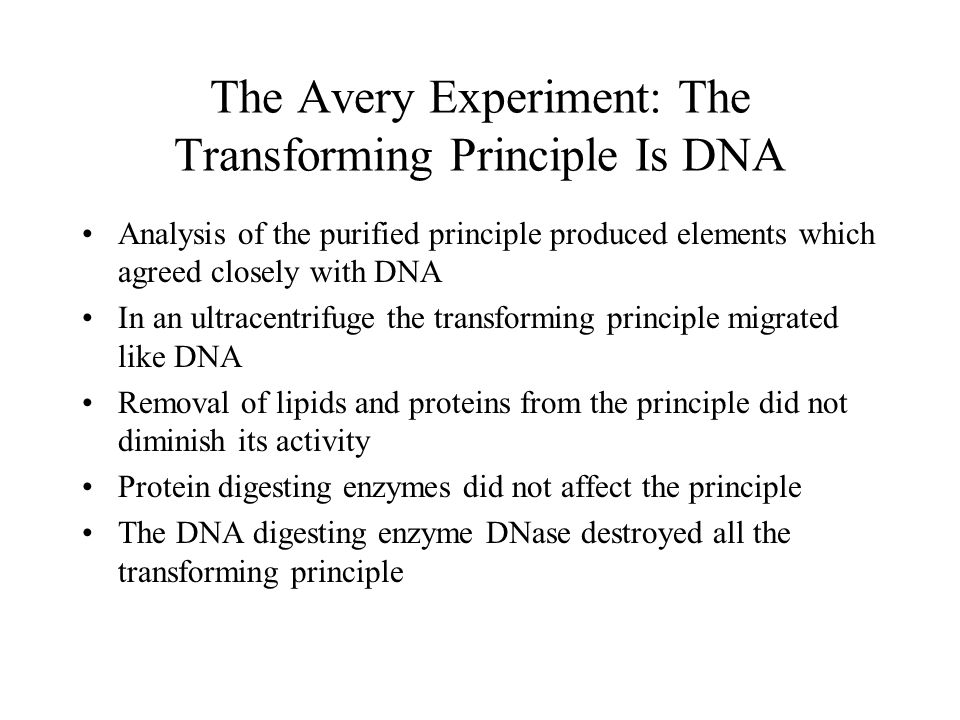 The Avery Experiment: The Transforming Principle Is DNA Analysis of the purified principle produced elements which agreed closely with DNA In an ultra