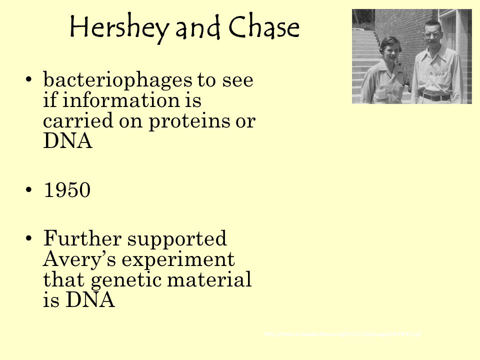Hershey and Chase bacteriophages to see if information is carried on proteins or DNA 1950 Further supported Avery's experiment that genetic material is DNA http://www.accessexcellence.org/RC/VL/GG/images/HERSHEY.gif