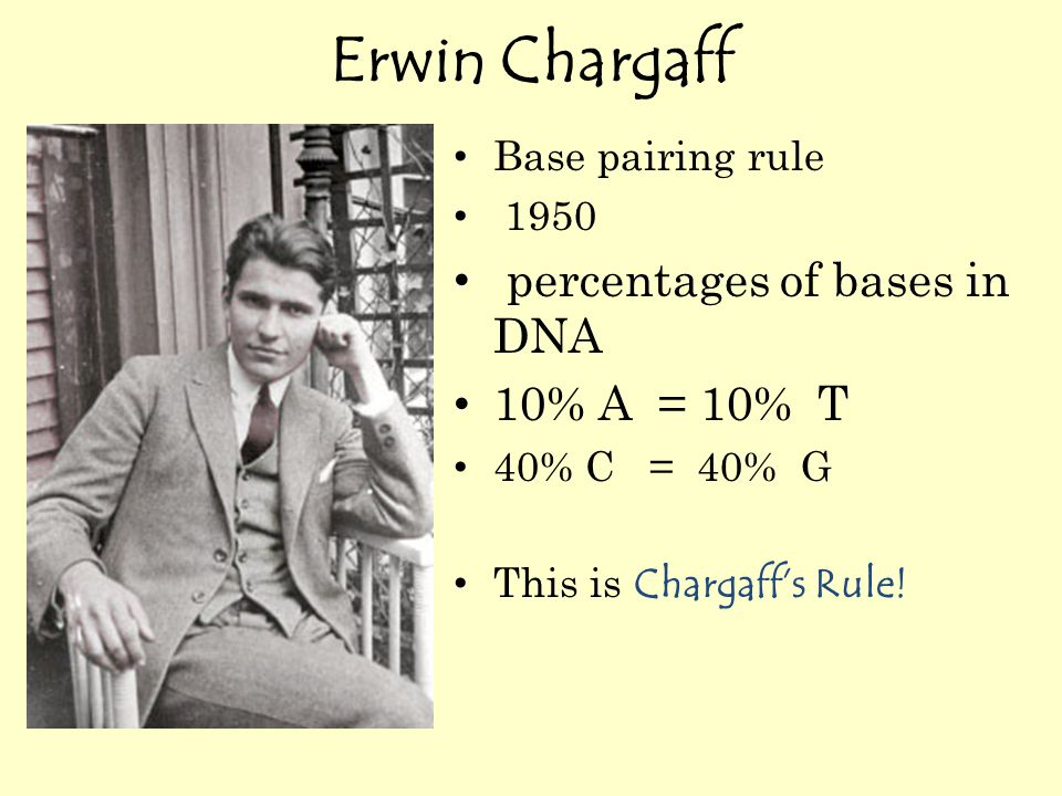 Erwin Chargaff Base pairing rule 1950 percentages of bases in DNA 10% A = 10% T 40% C = 40% G This is Chargaff's Rule!