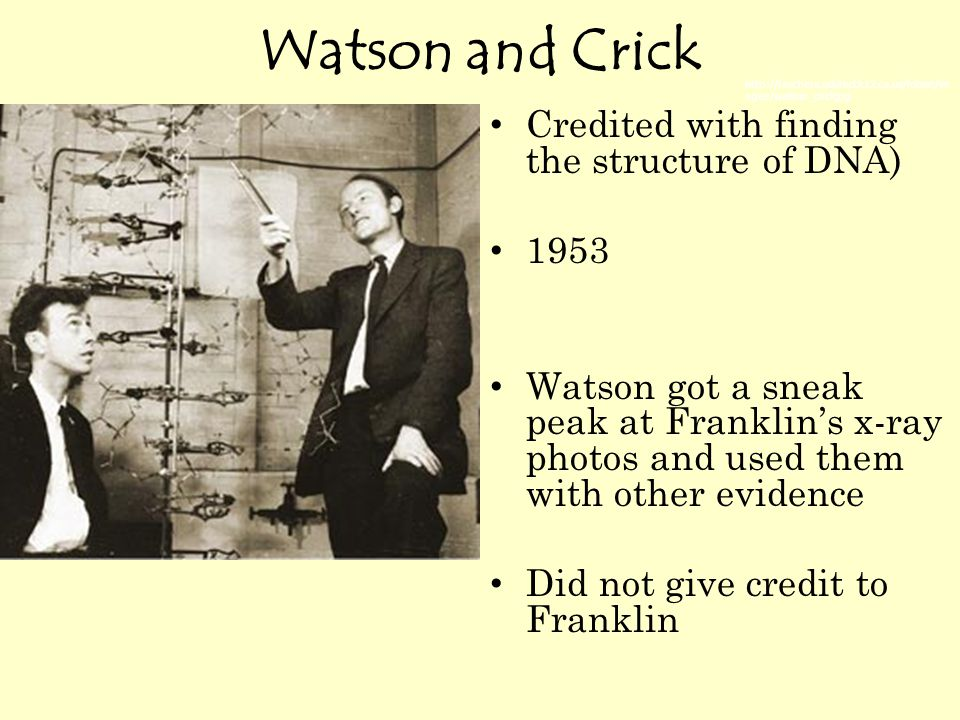 Watson and Crick Credited with finding the structure of DNA) 1953 Watson got a sneak peak at Franklin's x-ray photos and used them with other evidence Did not give credit to Franklin http://teachers.sduhsd.k12.ca.us/lolson/im ages/watson_crickjpg