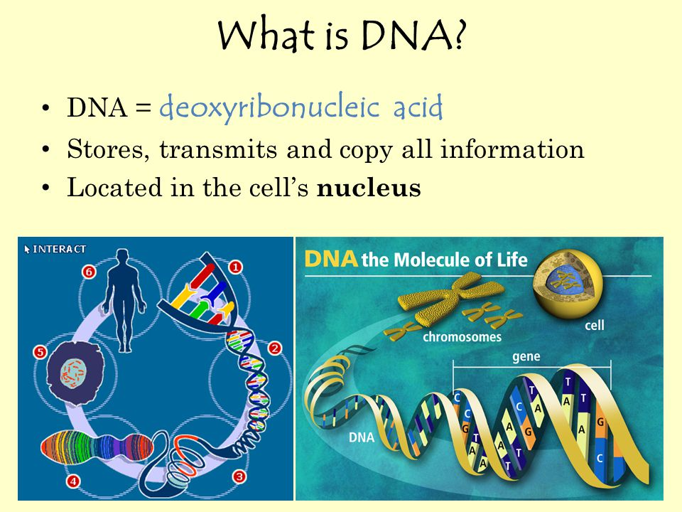 What do you know about DNA.