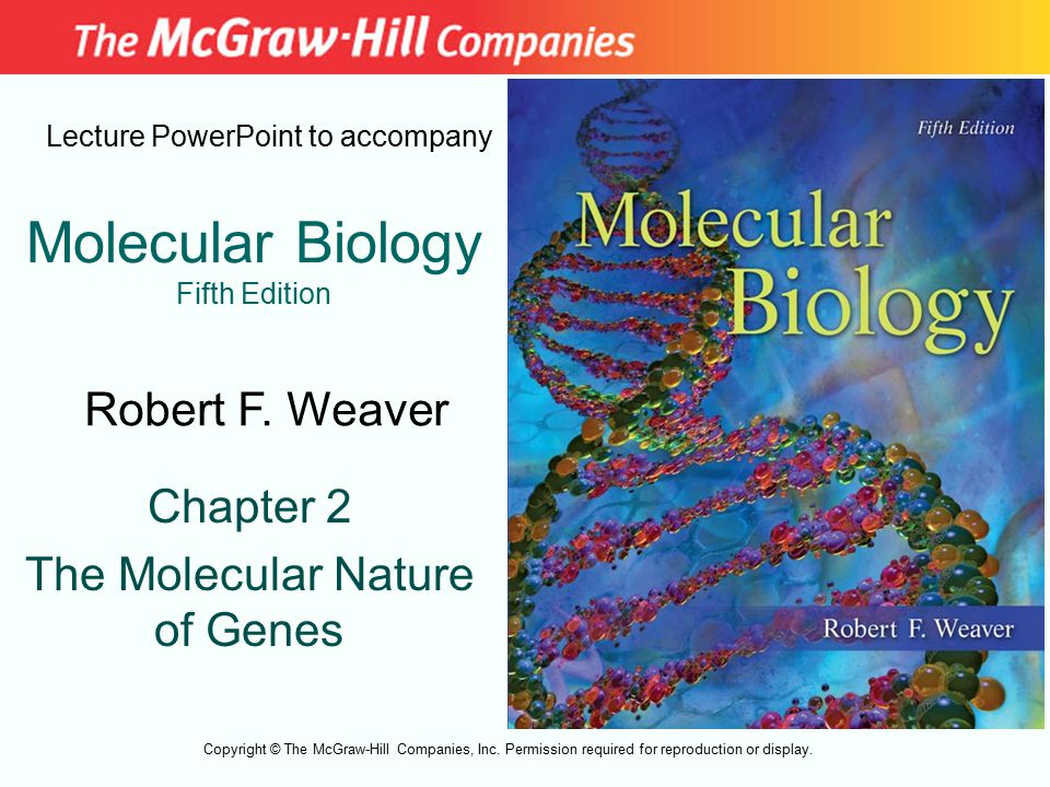 Molecular Biology Fifth Edition Chapter 2 The Molecular Nature of Genes Lecture PowerPoint to accompany Robert F. Weaver Copyright © The McGraw-Hill C