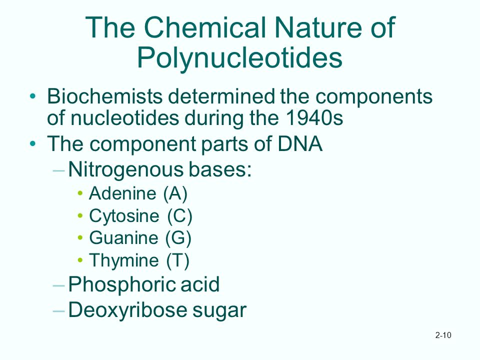 2-10 The Chemical Nature of Polynucleotides Biochemists determined the components of nucleotides during the 1940s The component parts of DNA –Nitrogen