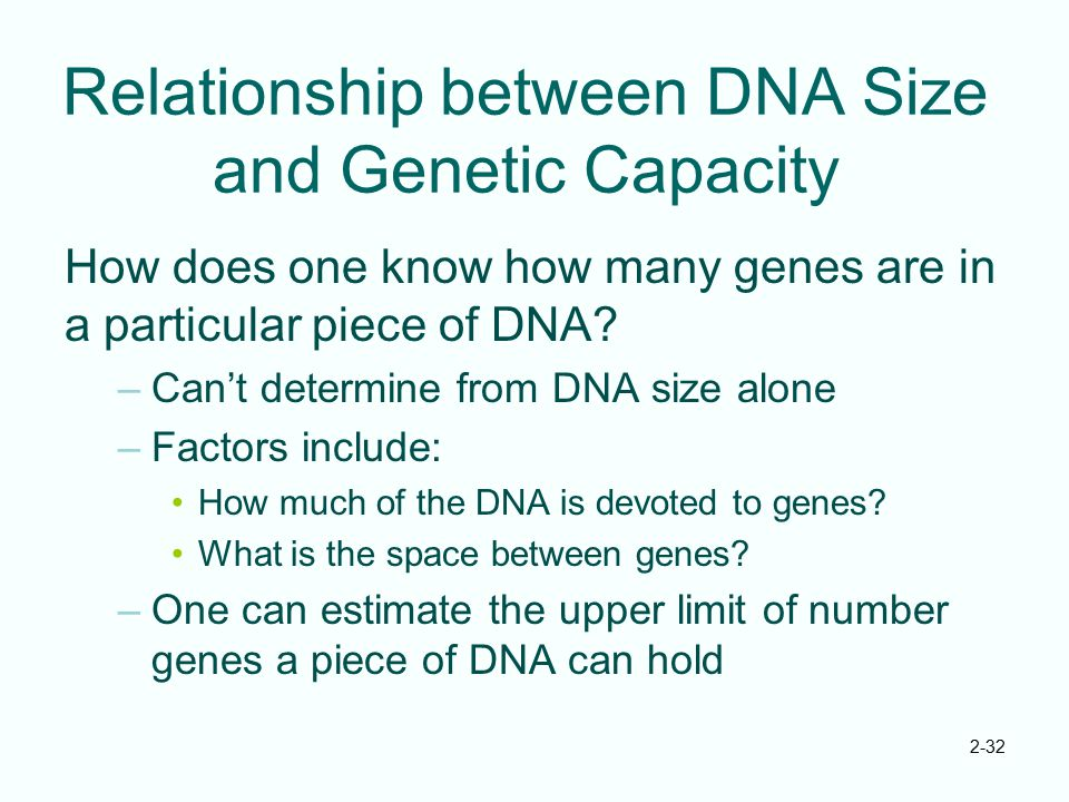 2-32 Relationship between DNA Size and Genetic Capacity How does one know how many genes are in a particular piece of DNA? –Can't determine from DNA s