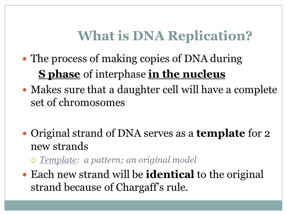 What is DNA Replication.