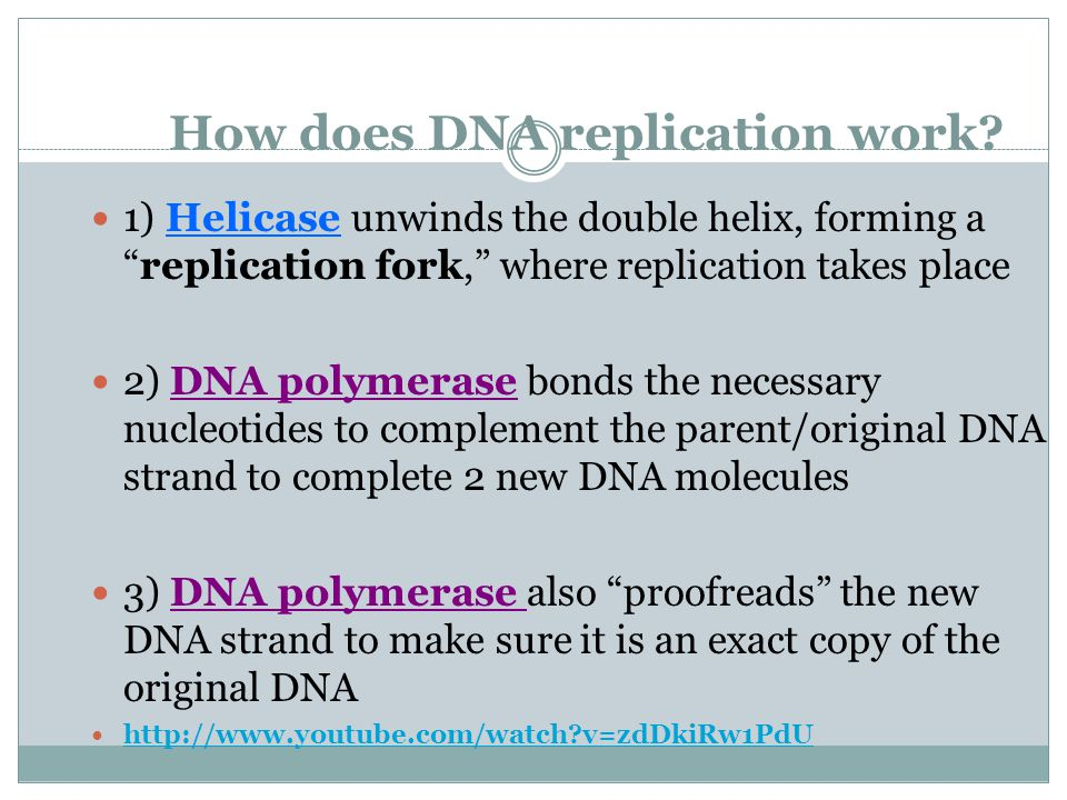 How does DNA replication work.