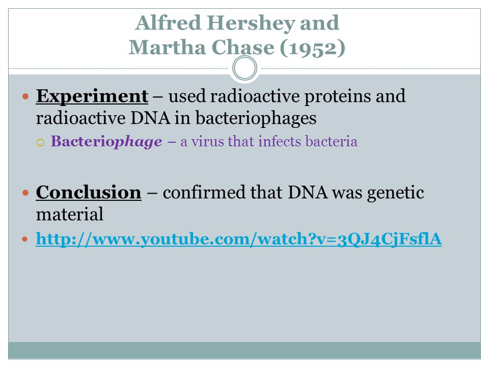 Alfred Hershey and Martha Chase (1952) Experiment – used radioactive proteins and radioactive DNA in bacteriophages  Bacteriophage – a virus that infects bacteria Conclusion – confirmed that DNA was genetic material http://www.youtube.com/watch?v=3QJ4CjFsflA