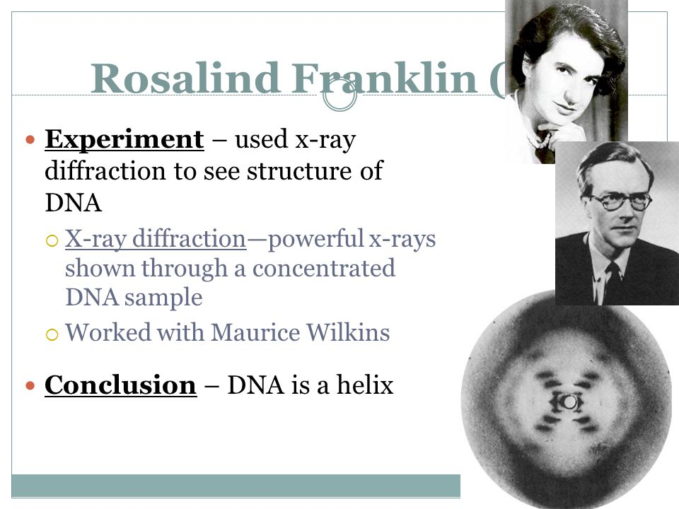 Rosalind Franklin (1952) Experiment – used x-ray diffraction to see structure of DNA  X-ray diffraction—powerful x-rays shown through a concentrated DNA sample  Worked with Maurice Wilkins Conclusion – DNA is a helix