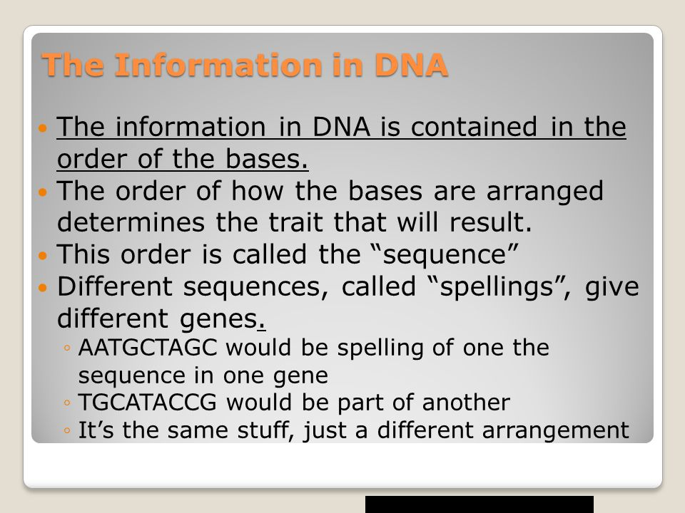 The Information in DNA The information in DNA is contained in the order of the bases.