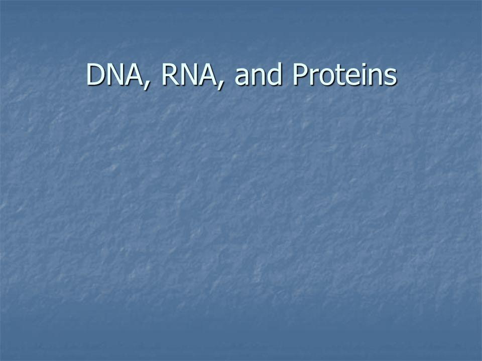 Visual Concept: Codons in mRNA