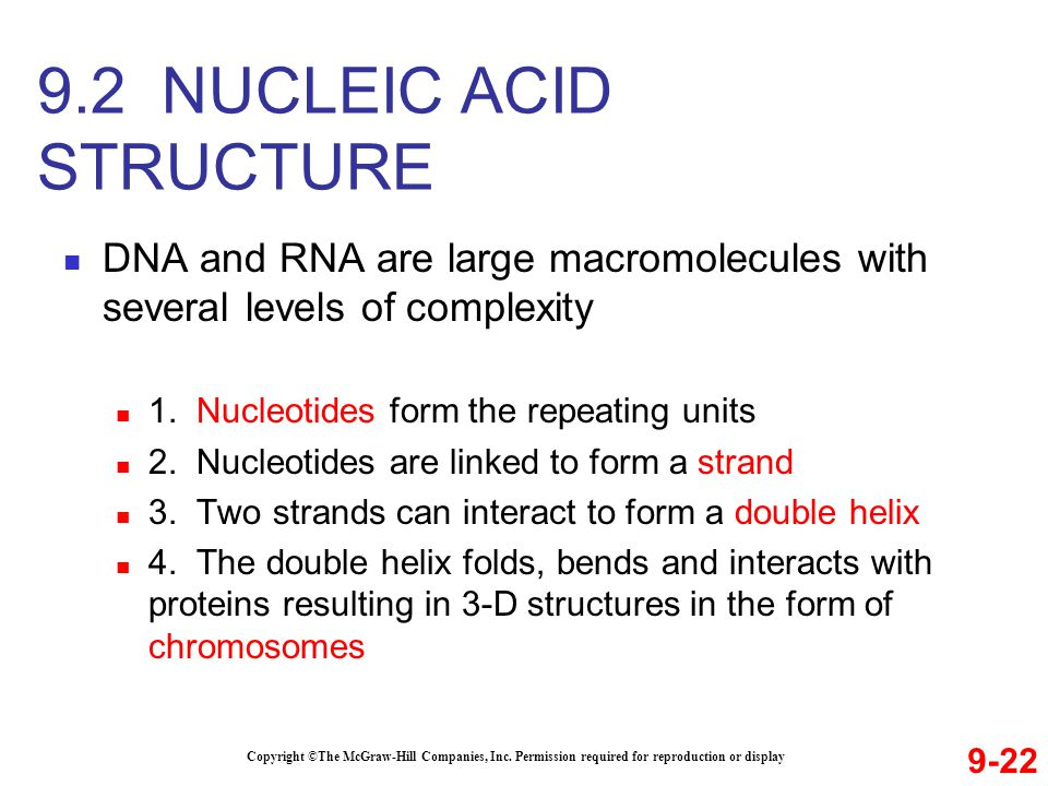 DNA and RNA are large macromolecules with several levels of complexity 1. Nucleotides form the repeating units 2. Nucleotides are linked to form a str