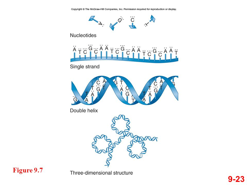9-23 Figure 9.7