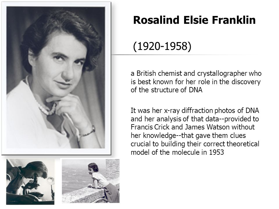 Rosalind Elsie Franklin (1920-1958) a British chemist and crystallographer who is best known for her role in the discovery of the structure of DNA It