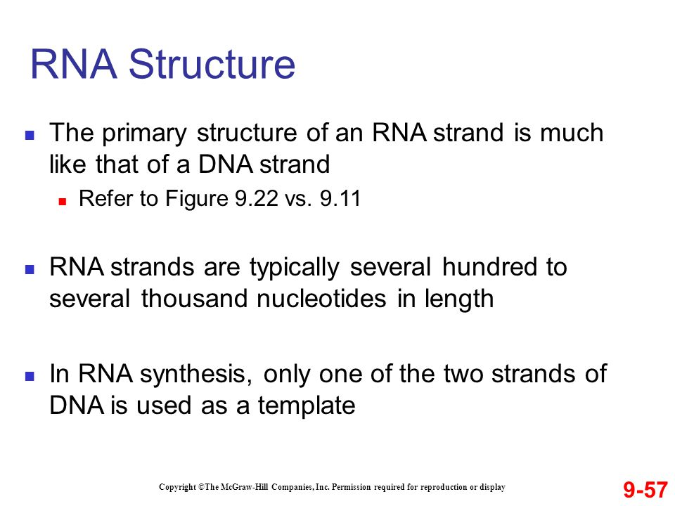 9-57 Copyright ©The McGraw-Hill Companies, Inc. Permission required for reproduction or display The primary structure of an RNA strand is much like th