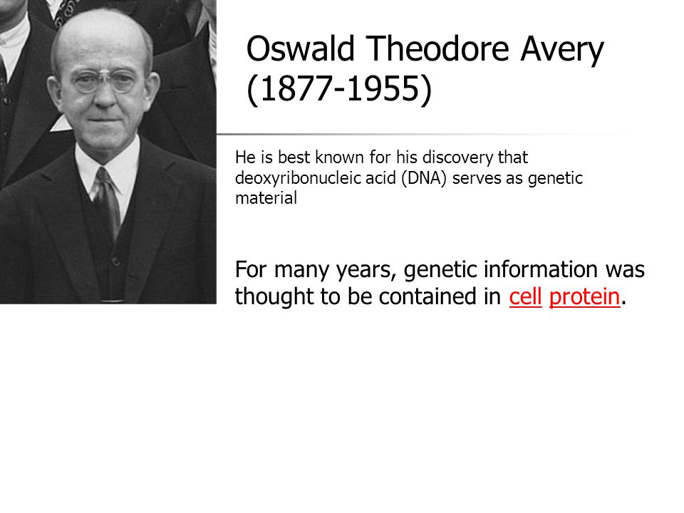 Oswald Theodore Avery (1877-1955) For many years, genetic information was thought to be contained in cell protein. cellprotein He is best known for hi