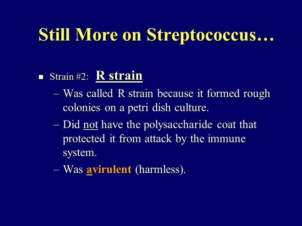 Still More on Streptococcus… Strain #2: R strain Strain #2: R strain –Was called R strain because it formed rough colonies on a petri dish culture.