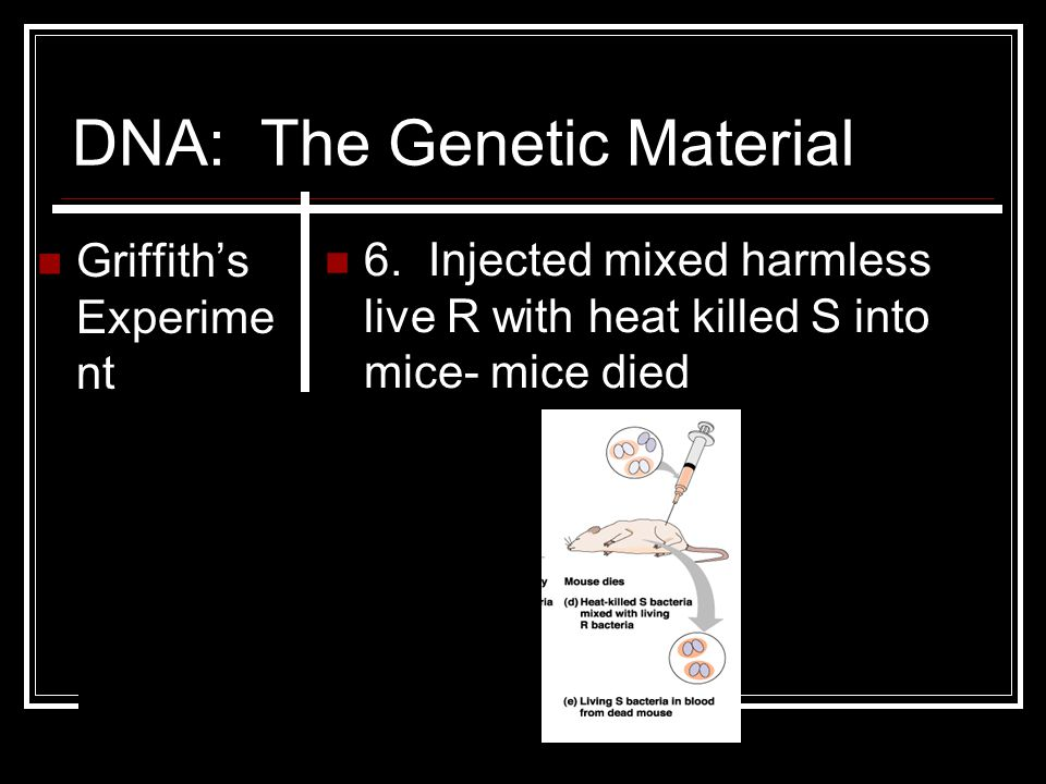 DNA: The Genetic Material Griffith's Experime nt 6. Injected mixed harmless live R with heat killed S into mice- mice died