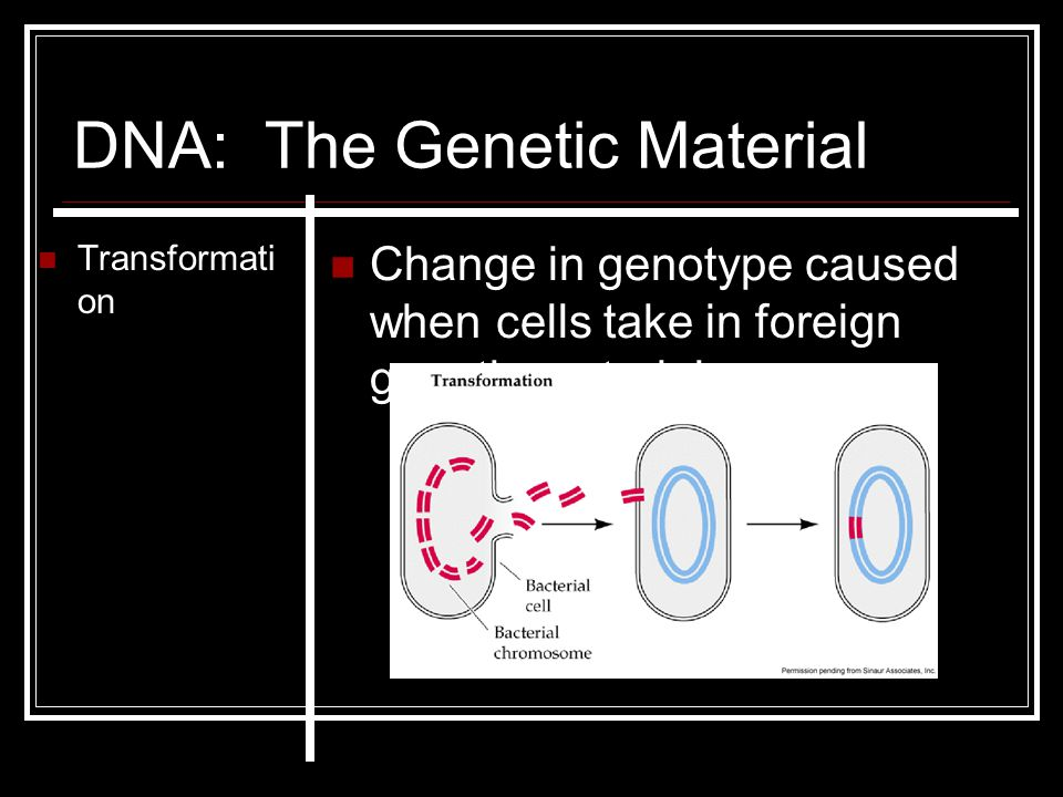 DNA: The Genetic Material Transformati on Change in genotype caused when cells take in foreign genetic material