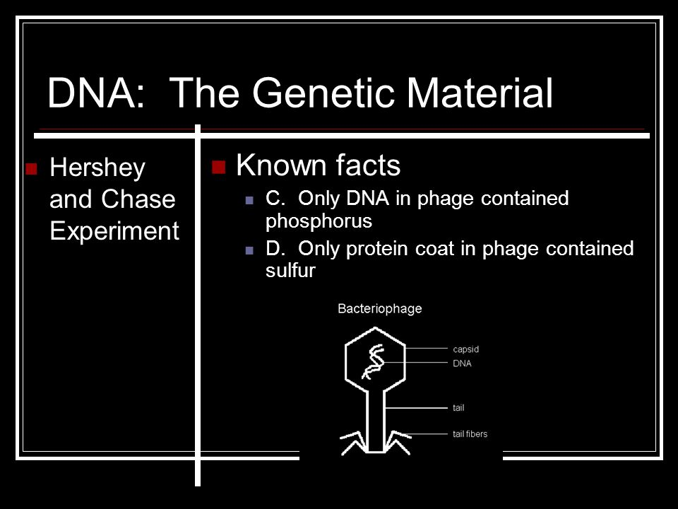 DNA: The Genetic Material Hershey and Chase Experiment Known facts C. Only DNA in phage contained phosphorus D. Only protein coat in phage contained s