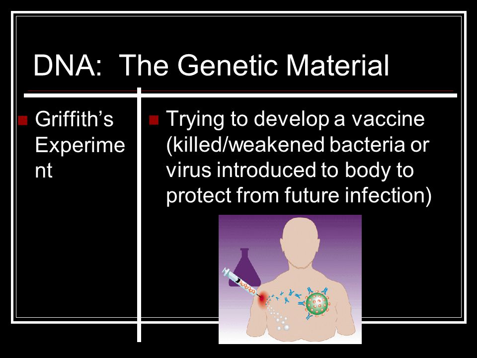 DNA: The Genetic Material Griffith's Experime nt Trying to develop a vaccine (killed/weakened bacteria or virus introduced to body to protect from fut
