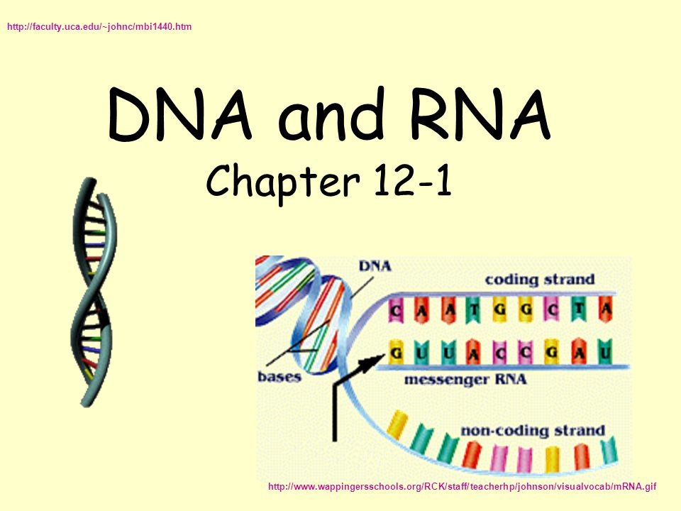 DNA and RNA Chapter 12-1 http://faculty.uca.edu/~johnc/mbi1440.htm http://www.wappingersschools.org/RCK/staff/teacherhp/johnson/visualvocab/mRNA.gif