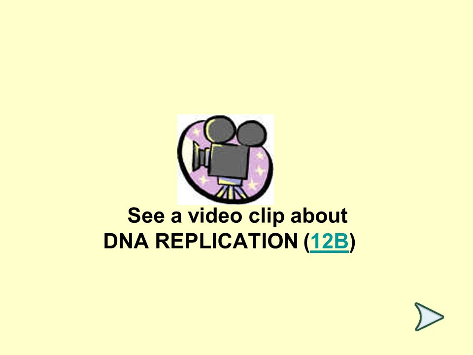See a video clip about DNA REPLICATION (12B)12B