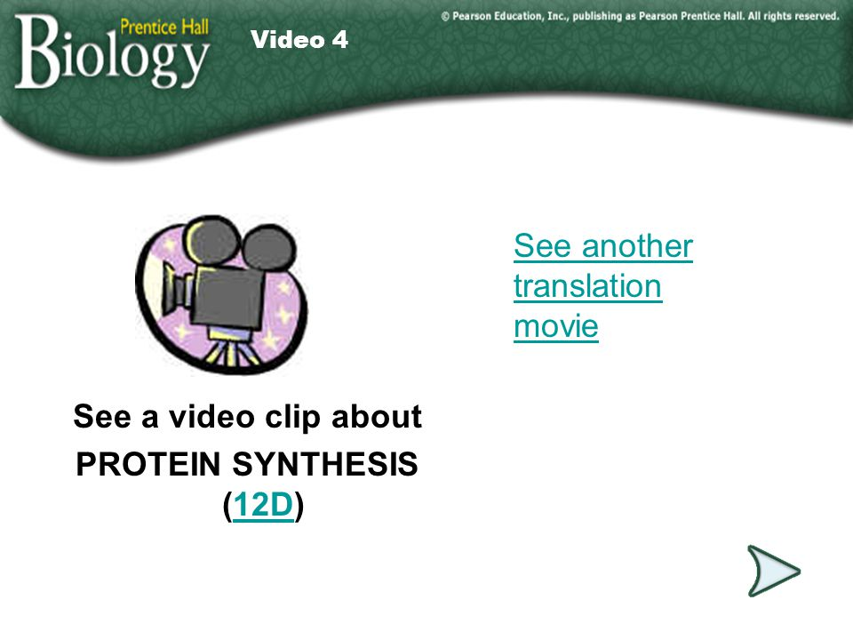 Video 4 See a video clip about PROTEIN SYNTHESIS (12D)12D Video 4 See another translation movie