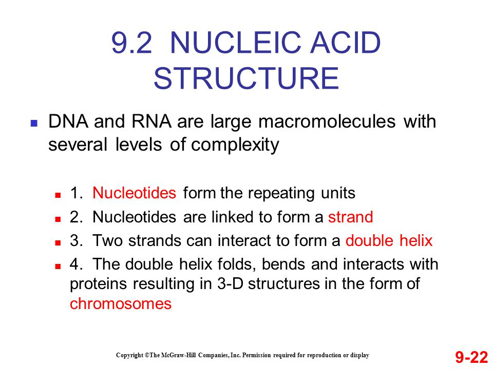 DNA and RNA are large macromolecules with several levels of complexity 1.