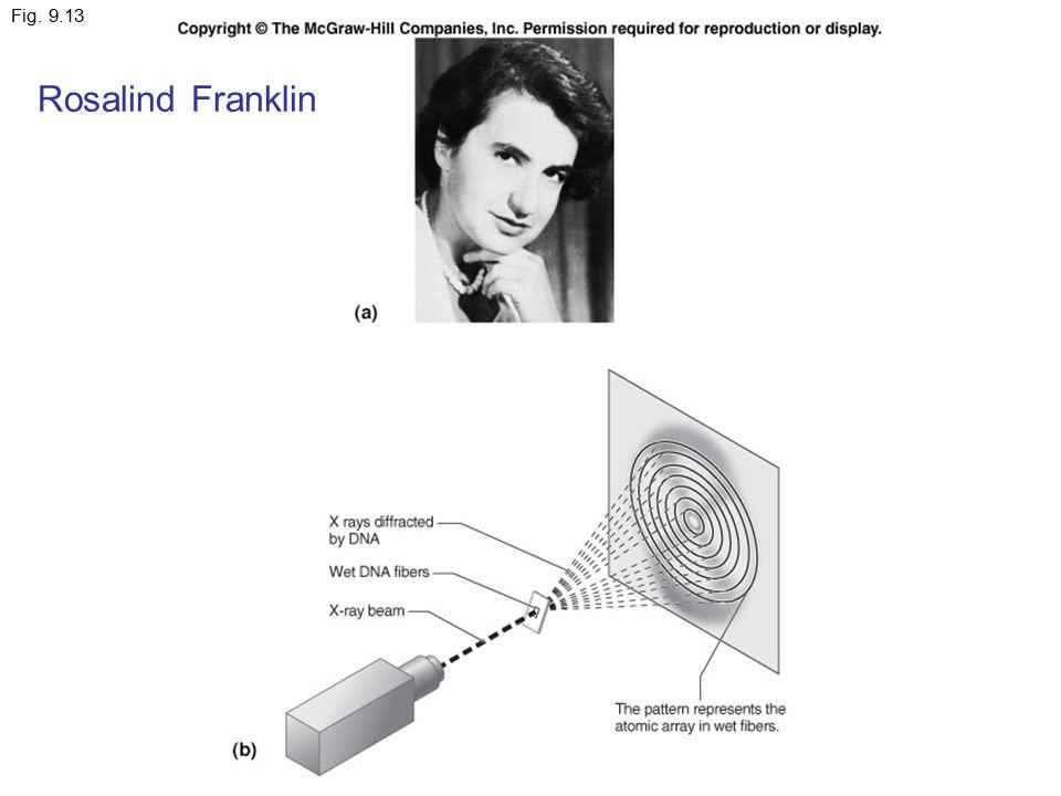 Fig. 9.13 Rosalind Franklin