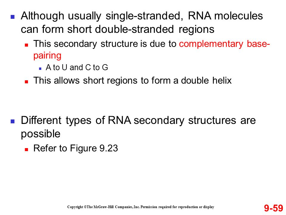 9-59 Copyright ©The McGraw-Hill Companies, Inc. Permission required for reproduction or display Although usually single-stranded, RNA molecules can fo