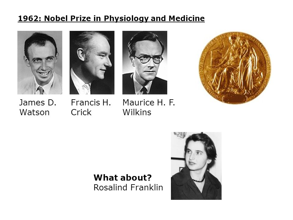 1962: Nobel Prize in Physiology and Medicine James D. Watson Francis H. Crick Maurice H. F. Wilkins What about? Rosalind Franklin