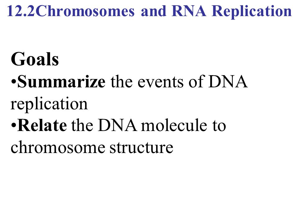 12.2Chromosomes and RNA Replication Goals Summarize the events of DNA replication Relate the DNA molecule to chromosome structure