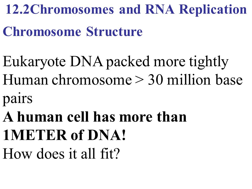 12.2Chromosomes and RNA Replication Eukaryote DNA packed more tightly Human chromosome > 30 million base pairs A human cell has more than 1METER of DN