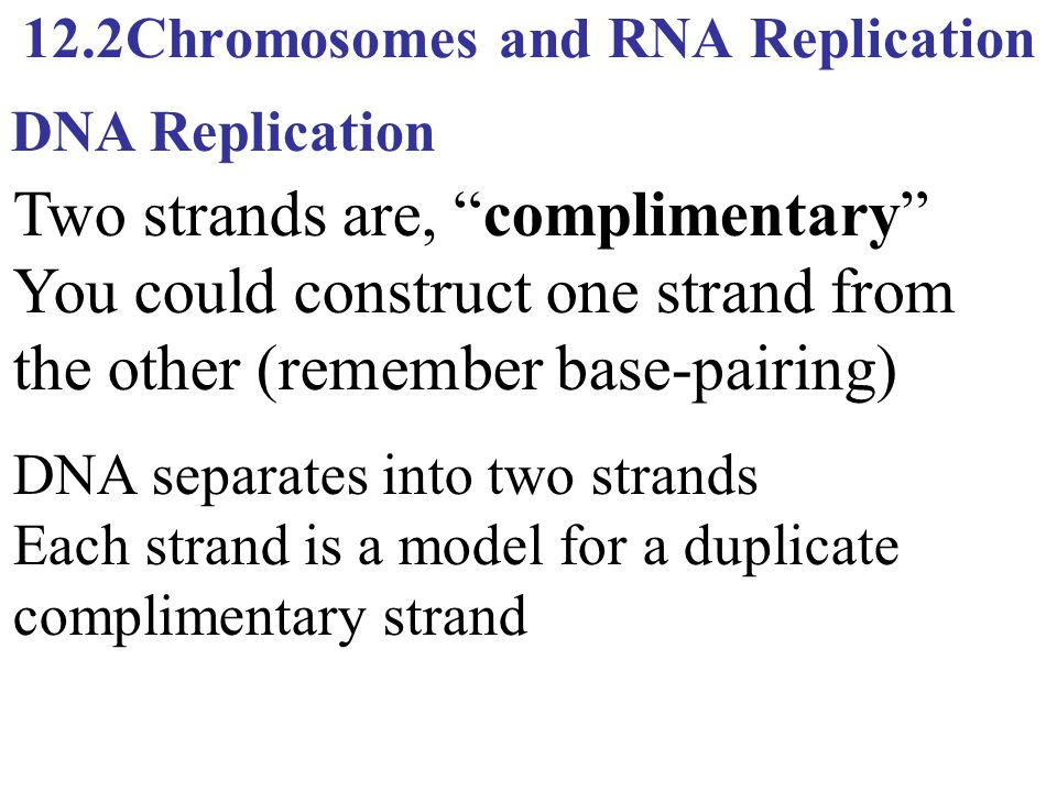 """12.2Chromosomes and RNA Replication Two strands are, """"complimentary"""" You could construct one strand from the other (remember base-pairing) DNA Replica"""