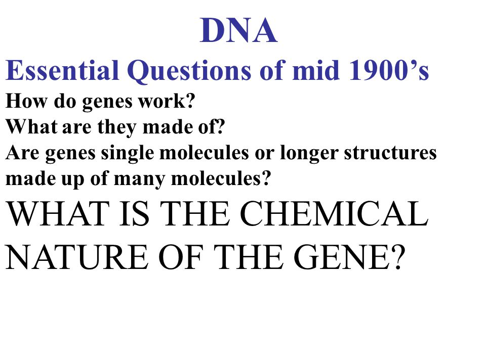 DNA Essential Questions of mid 1900's How do genes work? What are they made of? Are genes single molecules or longer structures made up of many molecu