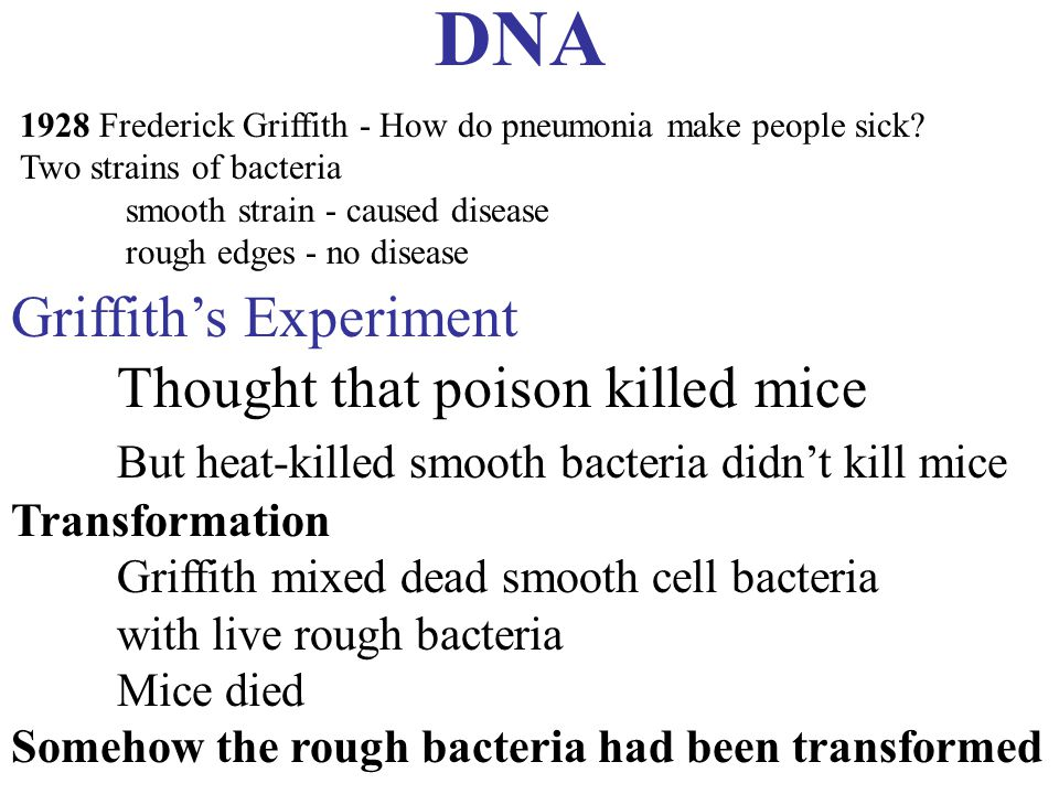 12.RNA and Protein Synthesis The Central Dogma (brief) DNA is copied to mRNA mRNA is used as blueprint to make protein