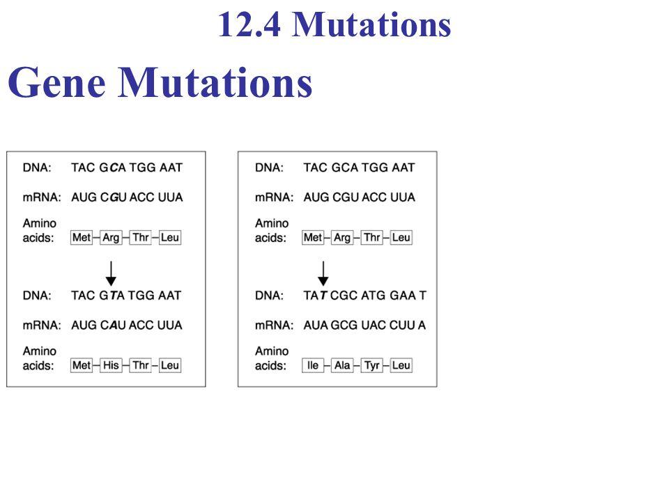 12.4 Mutations Gene Mutations