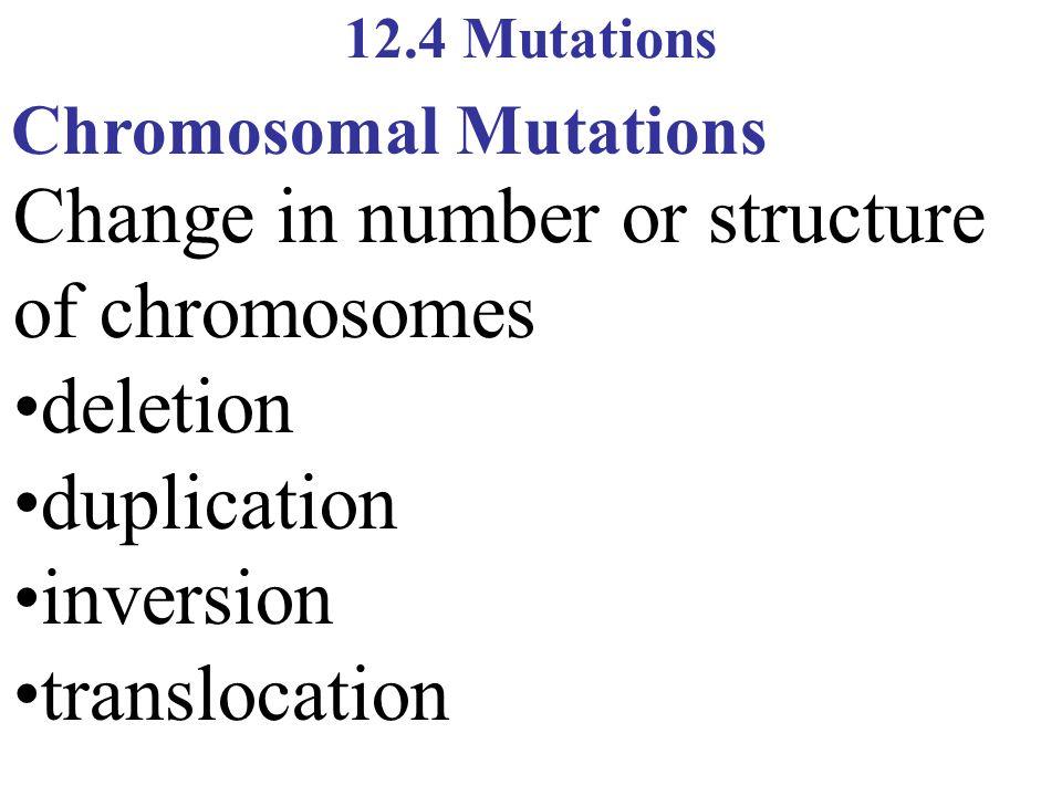 12.4 Mutations Chromosomal Mutations Change in number or structure of chromosomes deletion duplication inversion translocation