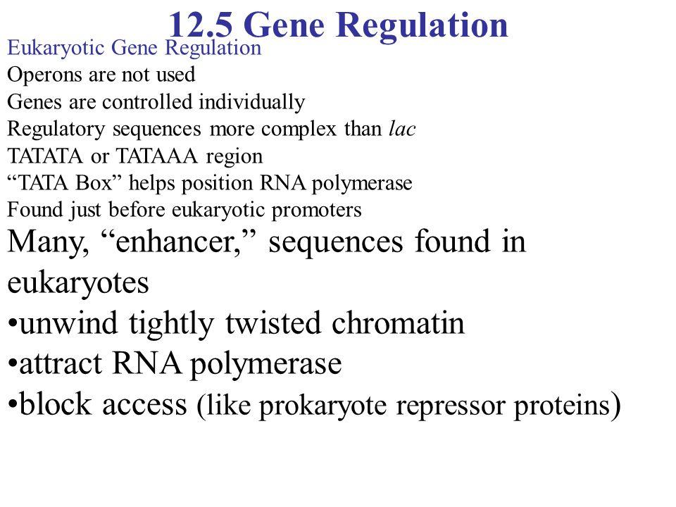 "12.5 Gene Regulation Many, ""enhancer,"" sequences found in eukaryotes unwind tightly twisted chromatin attract RNA polymerase block access (like prokar"