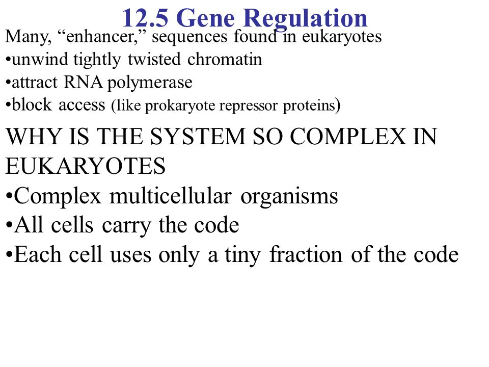 12.5 Gene Regulation WHY IS THE SYSTEM SO COMPLEX IN EUKARYOTES Complex multicellular organisms All cells carry the code Each cell uses only a tiny fr