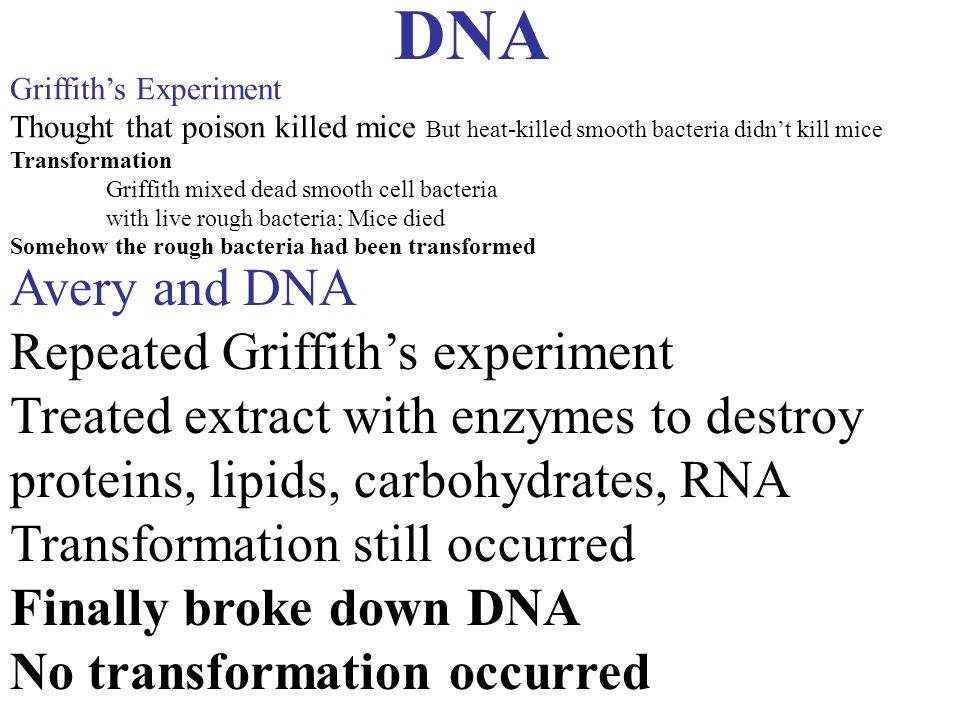 DNA Avery and DNA Repeated Griffith's experiment Treated extract with enzymes to destroy proteins, lipids, carbohydrates, RNA Transformation still occ