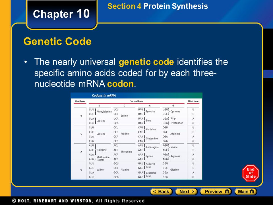 Chapter 10 Transcription Section 4 Protein Synthesis