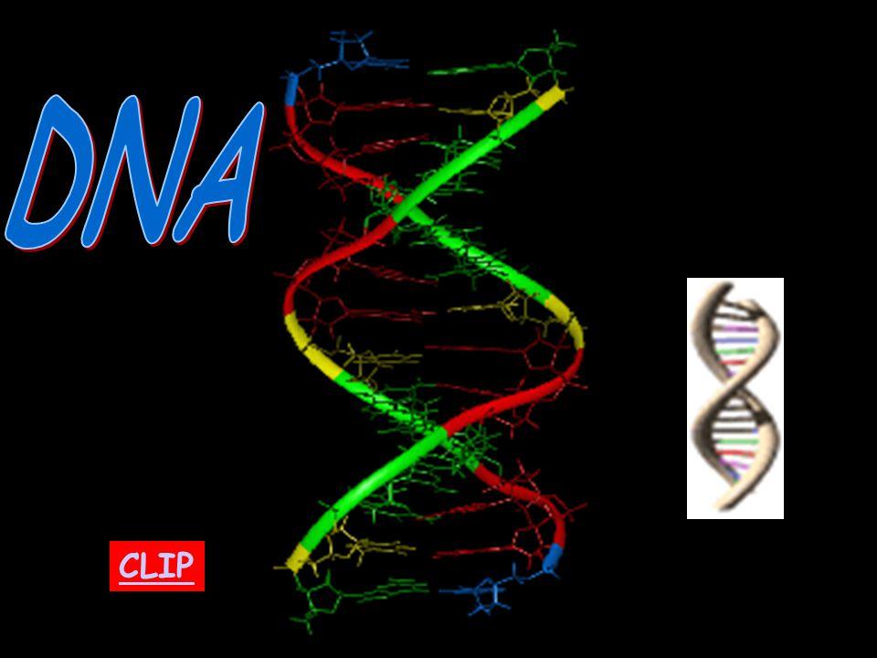 DNA CLIP