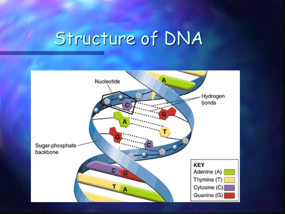 Learning Targets for Section 12.2 Summarize the events that happen in DNA replicationSummarize the events that happen in DNA replication Relate the DNA molecule to chromosome structure.Relate the DNA molecule to chromosome structure.