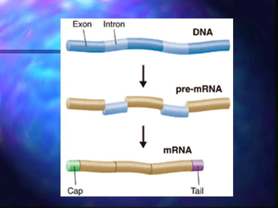 The Genetic Code The language of mRNA instructions is called the genetic code.The language of mRNA instructions is called the genetic code.