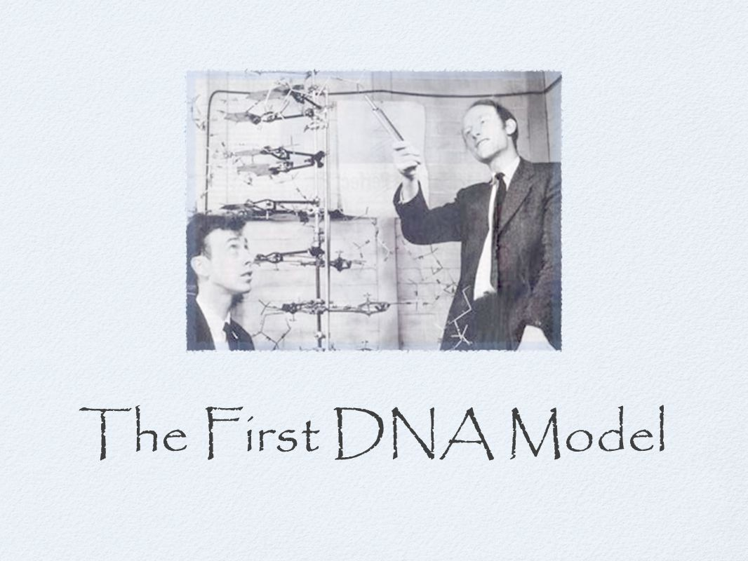 The First DNA Model